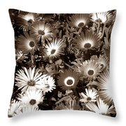 Sepia Asters Throw Pillow