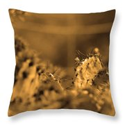 Sepia Cacti Close Up Throw Pillow