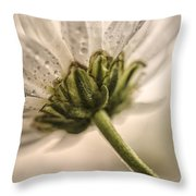 Sepia Daisy Throw Pillow