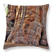 Sequoia Tree Base Throw Pillow