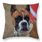 Serious Boxer  Throw Pillow