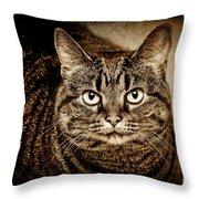 Serious Tabby Cat Throw Pillow