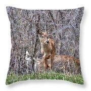Sertoma Park Deer Throw Pillow