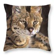 Serval Portrait Wildlife Rescue Throw Pillow