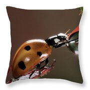 Seven-spotted Ladybird Coccinella Throw Pillow