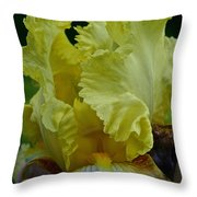 Shades Of Iris Throw Pillow