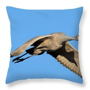 Shadow On His Wing Throw Pillow