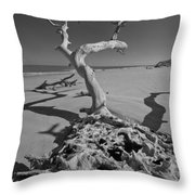 Shadows At Driftwood Beach Throw Pillow by Debra and Dave Vanderlaan