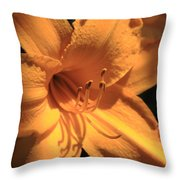 Day Lily Shadows Throw Pillow