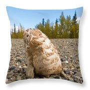 Shaggy Mane Mushroom Grows Through Gravel Surface Throw Pillow