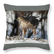 Sharp-shinned Hawk And Feather Throw Pillow