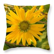 Shasta Daisy Throw Pillow