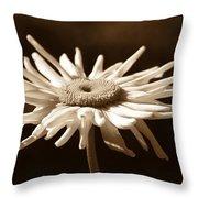 Shasta Daisy Flower Sepia Throw Pillow