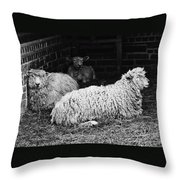 Sheep 2 Throw Pillow