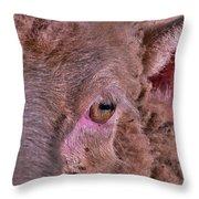 Sheep Close Up 2 Throw Pillow
