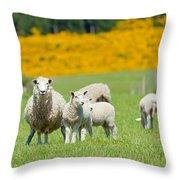 Sheep Grazing Throw Pillow