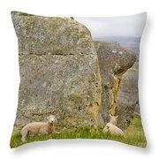 Sheep On A Mountain Pasture Between Granite Rocks Throw Pillow