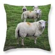 Sheep On Parade Throw Pillow