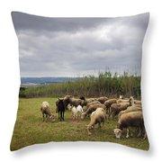 Sheep Pasturing Throw Pillow