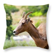Sheep Portrait Throw Pillow