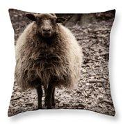 Sheep Stare Throw Pillow