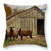 Sheeps  Throw Pillow