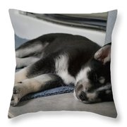 Shelby Our Puppy Throw Pillow by Lawrence Christopher