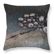 Shell Games Throw Pillow