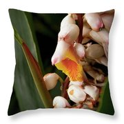 Shell Ginger Throw Pillow