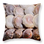 Shells In A Row Throw Pillow