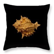 Shells Of The Gulf Coast 4 Throw Pillow