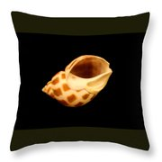 Shells Of The Gulf Coast 8 Throw Pillow