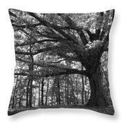 Shelter Me Throw Pillow