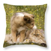 Sheltie Puppy And Persian Cat Throw Pillow