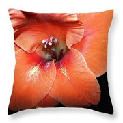 Sherbert Throw Pillow