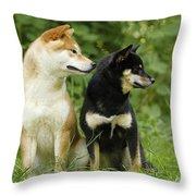 Shiba Inu Dogs Throw Pillow