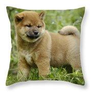 Shiba Inu Puppy Dog Throw Pillow