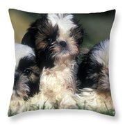 Shih Tzu Puppy Dogs Throw Pillow