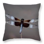 Shimmering Widow Skimmer Throw Pillow