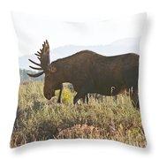 Shiras Bull Moose Throw Pillow