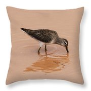 Shore Bird At Whitewater Draw Throw Pillow