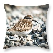 Shorebird Beauty Throw Pillow