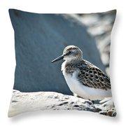 Shorebird Throw Pillow