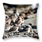 Shorebird Rest Time Throw Pillow