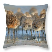 Shorebirds At Flamingo Bay Throw Pillow