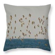 Shorebirds Flying Throw Pillow