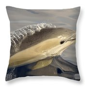Short-beaked Common Dolphin Azores Throw Pillow by Malcolm Schuyl