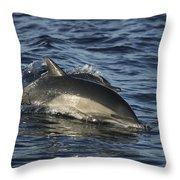 Short-beaked Common Dolphin Sea Throw Pillow