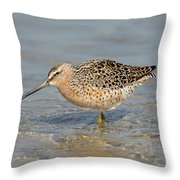 Short-billed Dowitcher, Breeding Throw Pillow
