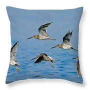 Short-billed Dowitchers In Flight Throw Pillow